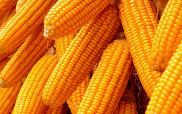 Maize-1
